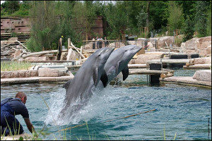Delphinlagune und Manatihaus