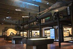 Jura-Museum Eichstätt