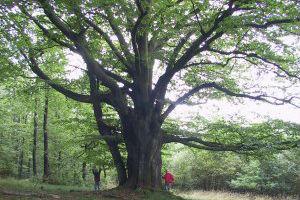 Naturpark Ebbegebirge