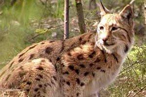 Tiere im Wildgatter Oberrabenstein  (c) Wildpark Oberrabenstein