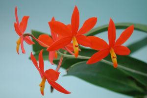 Orchideen-Zentrum Wichmann