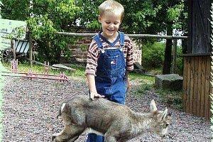 Kindergeburtstag im Wildpark in Potzberg