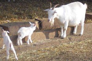 Tierbeobachtungen im Tierpark (c) Tierpark Sababurg