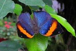 © alaris Schmetterlingspark