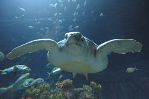 Sea Life Timmendorfer Strand ? Merlin Entertainments (SEA LIFE ...