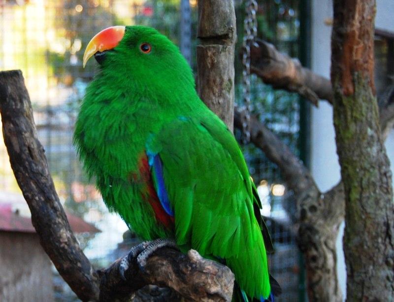 Vogelpark Liedolsheim