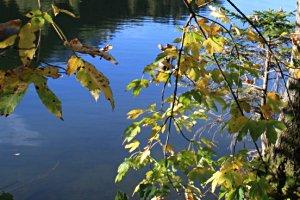 Wanderung um den Grünwiesenweiher Neu-Anspach