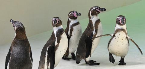 Eberswalde eintritt zoo Preise +