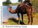 Kameltrekking Seeg im Allgäu