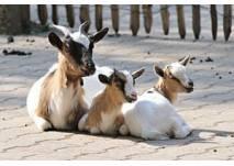 Kindergeburtstag im Aachener Tierpark