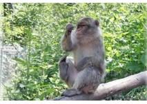 Im Affenwald Straußberg