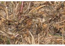 Ameisen-Erlebnisweg in Scharzenbach (c) alex grom
