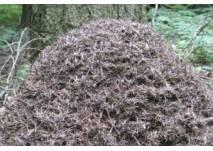 Ameisenlehrpfad in Kastel (c) alex grom
