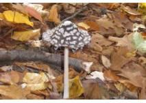Walderlebnispfad Bannwald Klebwald (c) alex grom