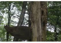 Baumerlebnispfad im Menke Park Oberneuland (c) Alex Grom