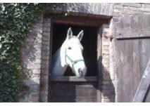 Ponyhof Regenbogen bei Beelitz