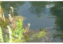 Naturlehrpfad am Teufelssee in Berlin