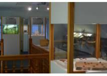 Bernsteinmuseum St. Peter-Ording