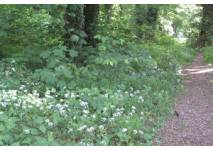 Waldweg im Frühling