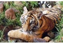 (c) Erlebnis- und Tigerpark in Dassow