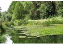 Naturlehrpfad Donau - Gronne - Lichternsee (c) alex grom