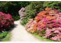 Rhododendronpark in Graal-Müritz