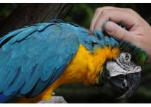 Kindergeburtstag im Vogelpark Heiligenkirchen