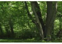 Großer Baumstamm im Wald