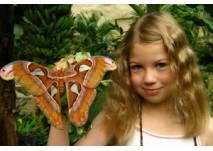 Schmetterlingspark Klütz