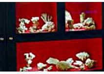 Vitrine im Korallenmuseum Nattheim