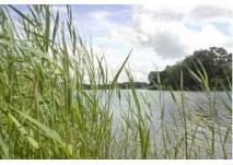 Freibad Großkühnau (c) Kuehnauer See