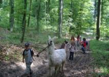 Kinder wandern mit Lama im Wald