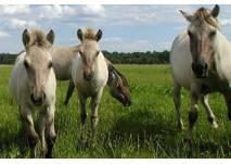 Haustierpark und Wildpferdgehege Liebenthal