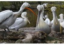 Vogelpark Ludwigshafen-Ruchheim