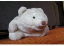 Lars, der kleine Eisbär im Planetarium Mannheim (c) alex grom