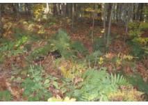 Tannenbühl Naherholungsgebiet Bad Waldsee (c) alex grom