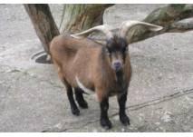 im Nymphaea-Tierpark (c) alex grom