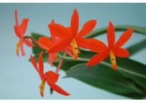 Orchideenzentrum Wichmann