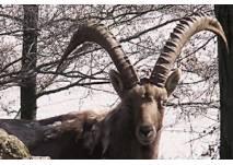 Tierbeobachtungen im Wildpark (c) Wildpark Osterzgebirge