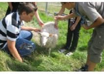 Familien- und Haustierpark im MAFZ Paaren
