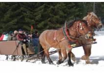 Pferdeschlittenfahrt auf den Rennsteig von und nach Oberhof(c) Reit- und Kutschtouritik Rainer Ortlepp