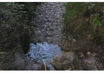 Quelle im Wald