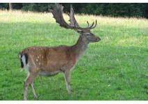 Rotwild- und Damwildgehege Rodewisch