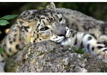Kindergeburtstag im Zoo Salzburg