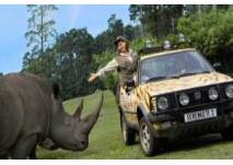 Nashorn am Jeep