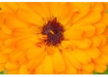 Klimaweg Sonnenbühl (c) alex grom
