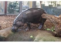 Kindergeburtstag im Tierpark Chemnitz