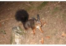 Tierpark Oberwald (c) alex grom