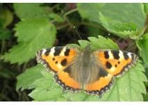Der Schmetterlingspfad im Urfttal