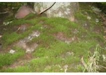 Walderlebnispfad Gutach (c) alex grom